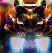 """Glass Jar / Mindkilla (12"""" Single / Vinyl) at Kmart.com"""