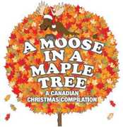 A Moose in a Maple Tree: A Christmas Compilation (CD) at Kmart.com