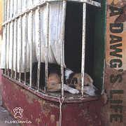Dawg's Life (CD) at Kmart.com