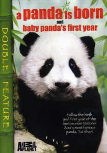 Panda Is Born & Baby Panda's First Year